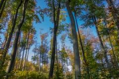 Herbstlaub am Borkenkäferpfad