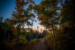 Herbstlicher Sonnenuntergang im Harz